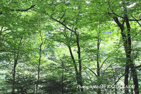080509takao_mori.jpg