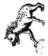 hyena2.jpeg