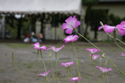 2008_05_29_a.jpg