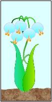 ブルーチェリンリン(純系植物)