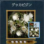 yorusika2.jpg