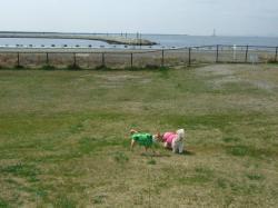 2008_0329海のふれあい公園0012