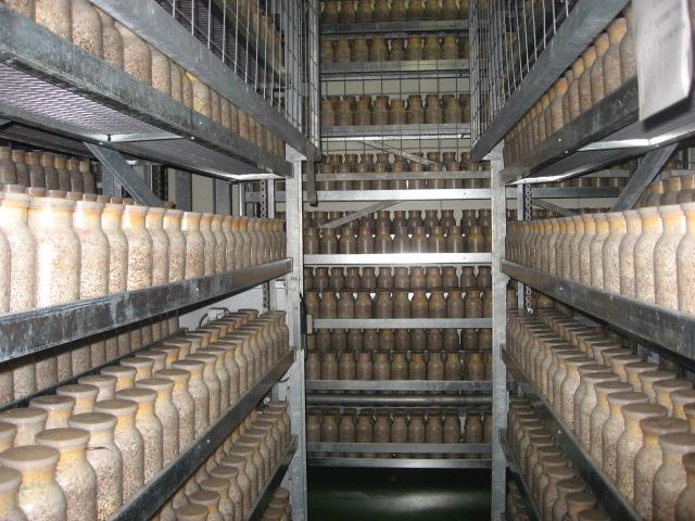 地球に、人に優しい、最先端農業経営を実践する、アルプス高原きのこ生産工場