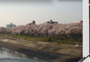 写真加工 6(福井市足羽河原桜)
