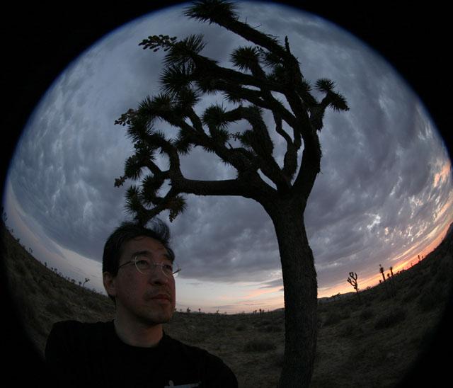Joshua Tree9