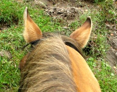 馬の背より