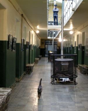 監獄に猫一匹