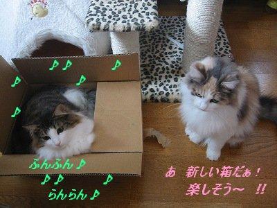 2-168_6810.jpg