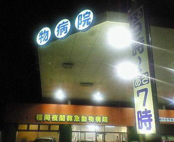 080623 福岡夜間救急動物病院
