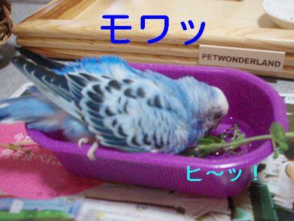 ぴぃくん 水浴び
