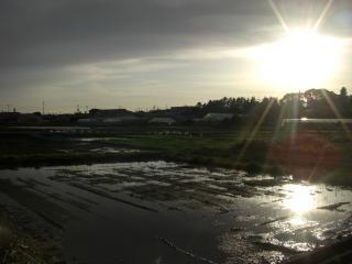 雨上がりの畑。