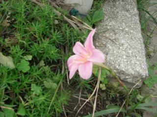 一輪の花。