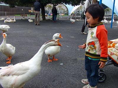 2008_0511舎人TDL富山ららぽ0008