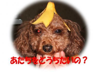 06251_convert_20080626003057.jpg