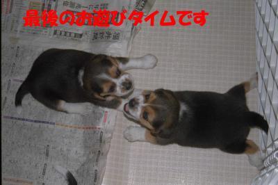 070817_convert_20080709000154.jpg