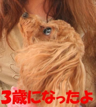070836_convert_20080709000930.jpg