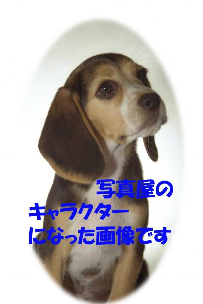 07083_convert_20080708235508.jpg