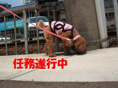 7032_convert_20080703234604.jpg