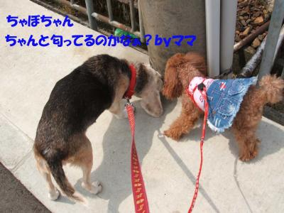 DSCF5397_convert_20080518165607.jpg