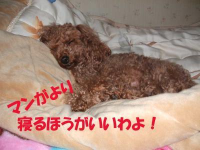 DSCF5420_convert_20080521010830.jpg