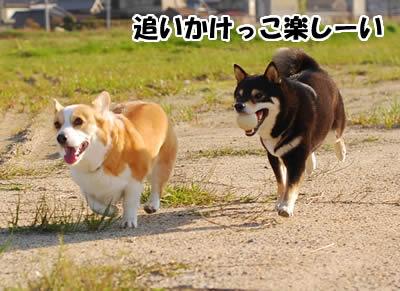 20080422_0061.jpg