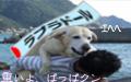 おんぶされる犬 ブログ村へ