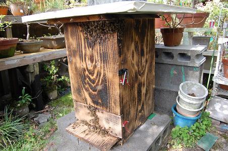 収容巣箱(日本蜜蜂)