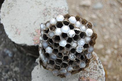 下から見た巣