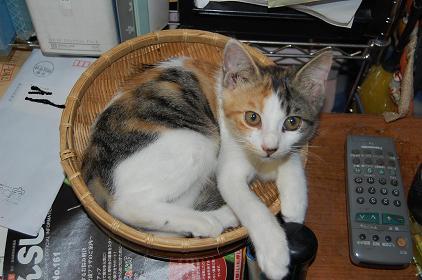 猫(リリー)