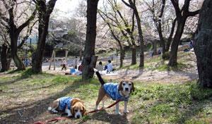 2008_04_5.jpg