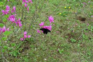 2008_05_05_20.jpg