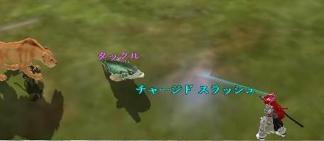 地上判定の魚・・