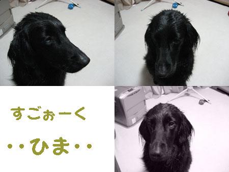 b41002.jpg