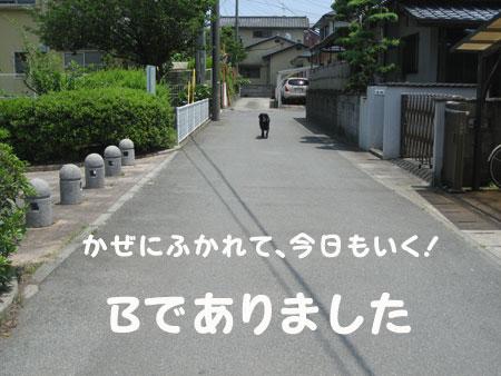 b6607.jpg