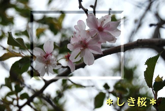 ky30DSC_0513.jpg