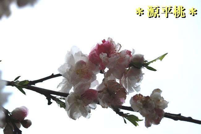 ky32DSC_0506.jpg