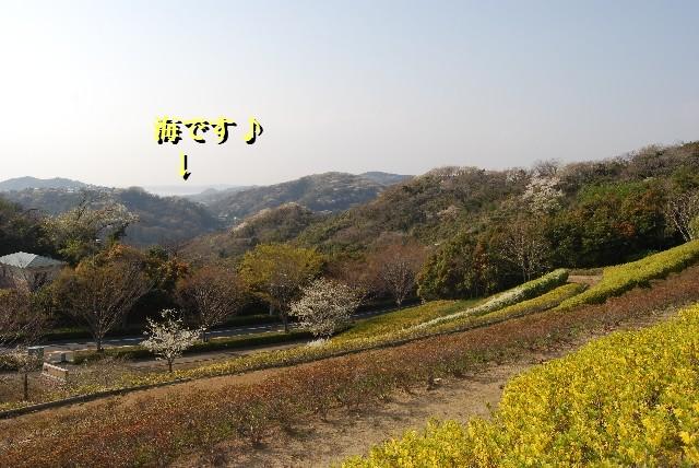 ky38DSC_0114.jpg