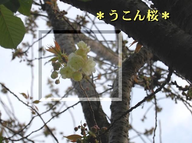 ky7DSC_0502.jpg