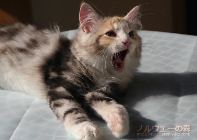 cat001.jpg