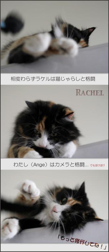 rc476.jpg