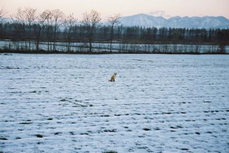 冬への困惑