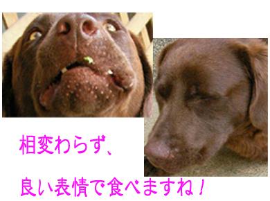 6_20080723152748.jpg