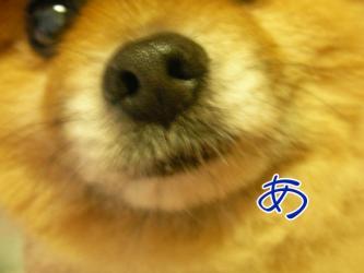 SANY0132.jpg