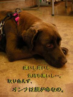 SANY0593_20080611000511.jpg