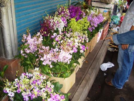 チャトチャック花市場 2