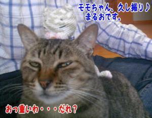image06151.jpg