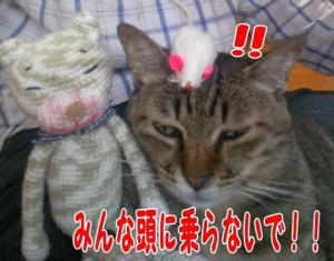 image06154.jpg