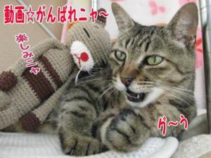 image08011.jpg