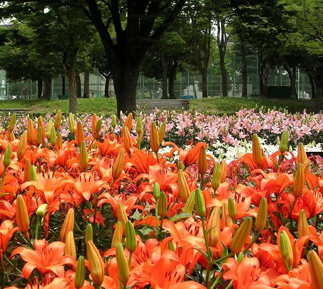 DSCN1800千種公園