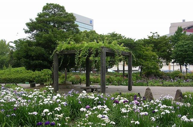 DSCN1982神宮東公園